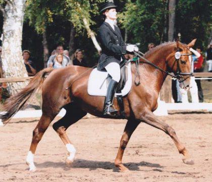 Egida Dressurpferd bis Klasse M und 14  Fohlen