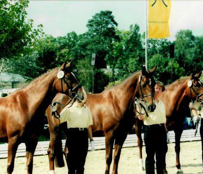 Whisper mit ihren Töchtern St.Pr.St. Egida und St.Pr.St. Whadi Sa in Verden auf der Ratje Niebuhr Schau 2000